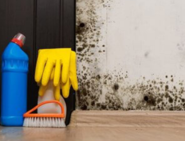 Mold Removal BLOG FEATURE PHOTO (39)